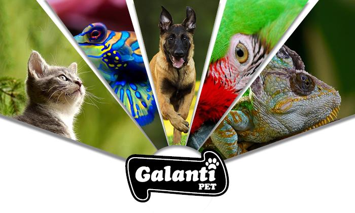 Galanti Store animali domestici