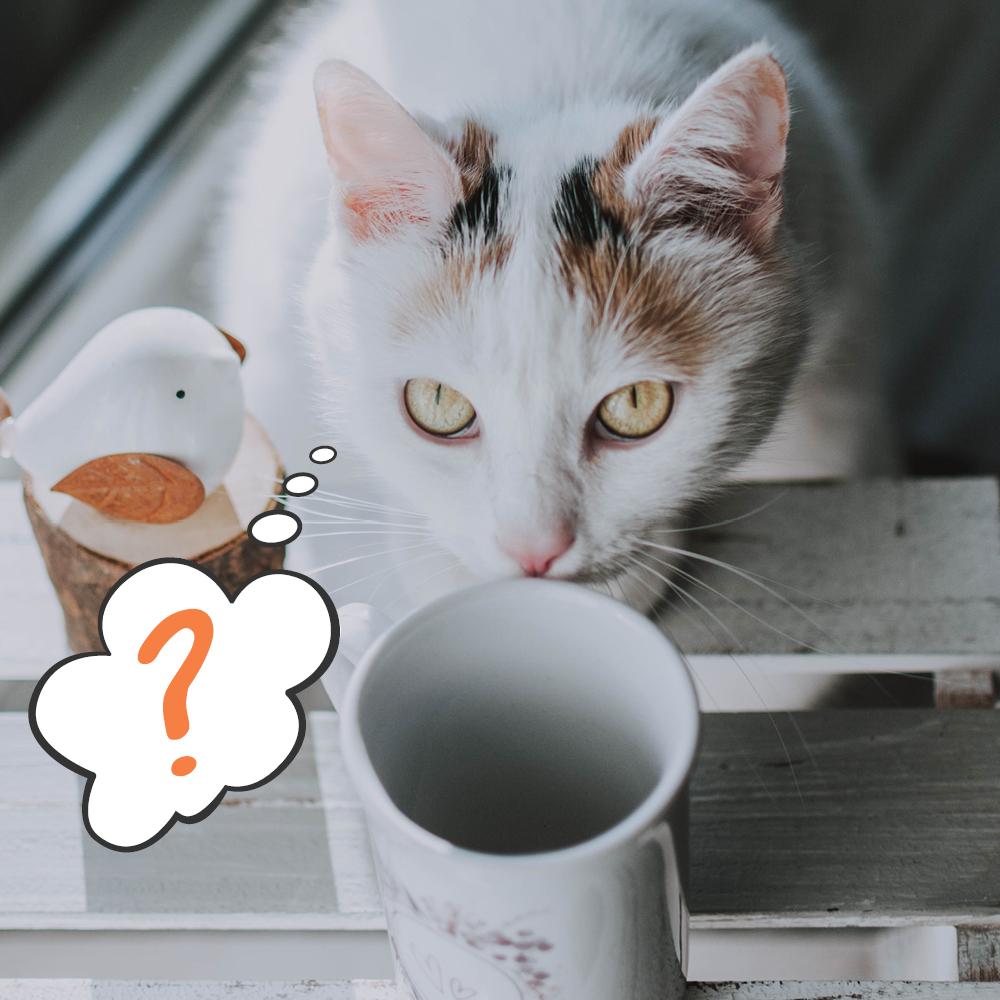 I gatti non percepiscono il sapore dolce!